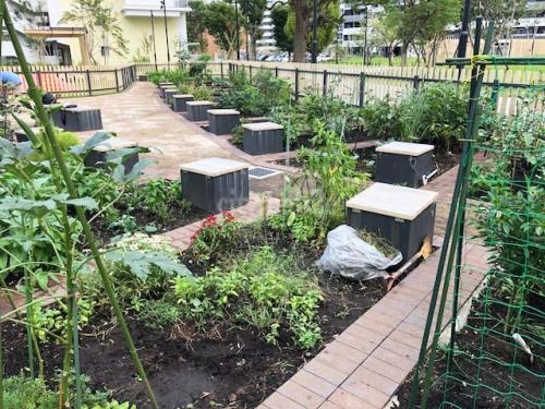 コンフォール松原>菜園