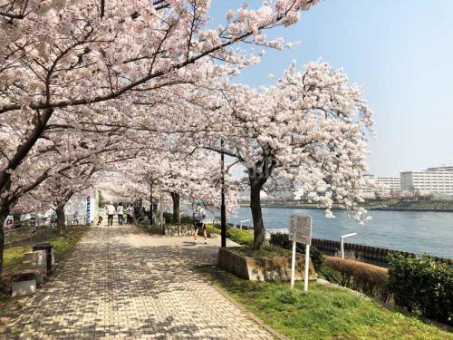 コーシャタワー佃>桜